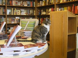 Orinda Books in Orinda, California features their bookstore cat right on the website's home page. They welcome you to come in and pet Ginger, who is accustomed to customers. Here you see her drawing attention to a table of books for sale. Photograph by Karen Lile. Text and photo accessed at http://mentalfloss.com/article/29928/10-excellent-bookstore-cats